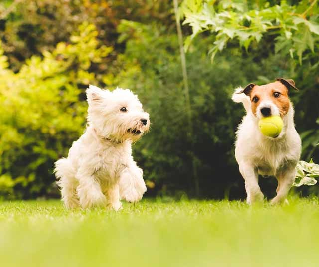 pet-insurance-dogs